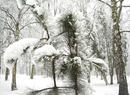 Śnieżna i mroźna zima