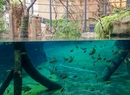 Lato w Zoo