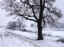 Wiosenny śnieg i lód