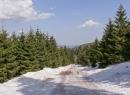 Zima w górskich lasach