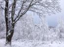 Bajeczna zima